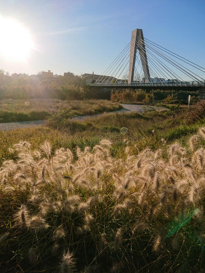 Manises Bridge over the Turia River at sunset with dried herbs in the foreground royalty free stock images