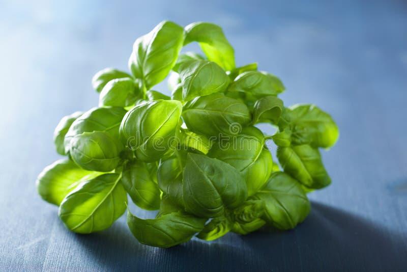 A manjericão fresca sae da erva sobre o fundo azul fotos de stock
