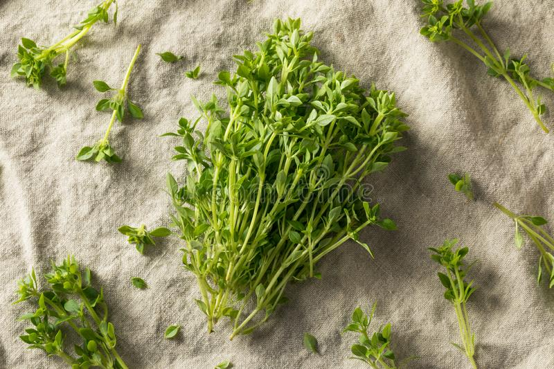 Manjericão grega picante orgânica verde crua fotos de stock