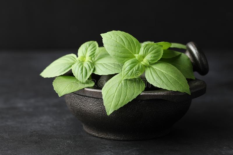 A manjericão verde fresca sae no almofariz do ferro fundido no fundo preto foto de stock royalty free