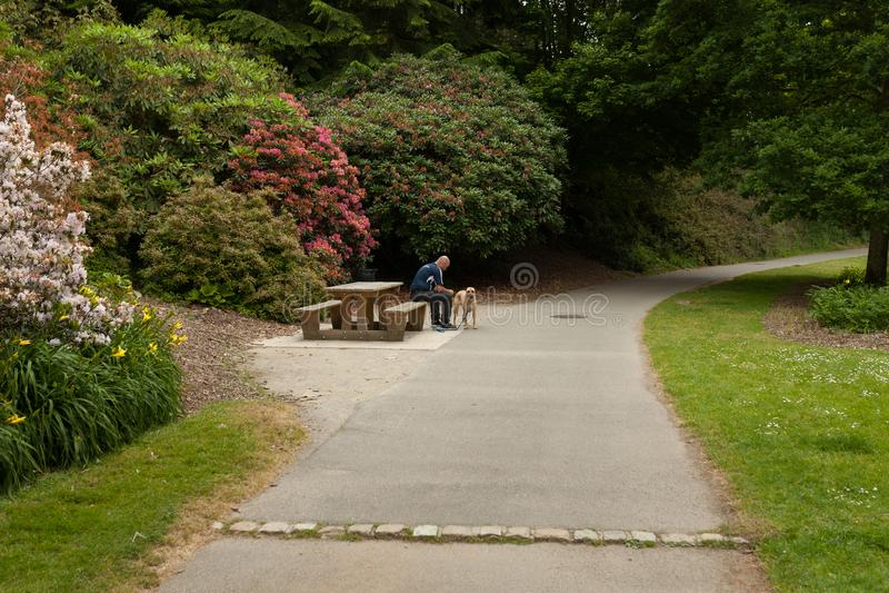 Mankelhunden på bänk i trädgård i sommar i parkerabotaniska trädgården Le Vallon du stack Alar Brest France 28 kan 2018 royaltyfri bild
