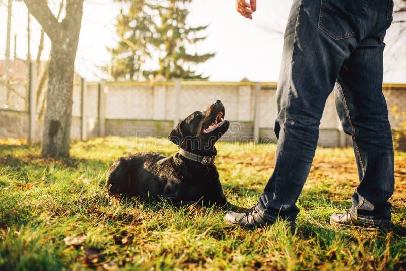 Manlig cynologist med den tjänste- hunden som utanför utbildar arkivfoto