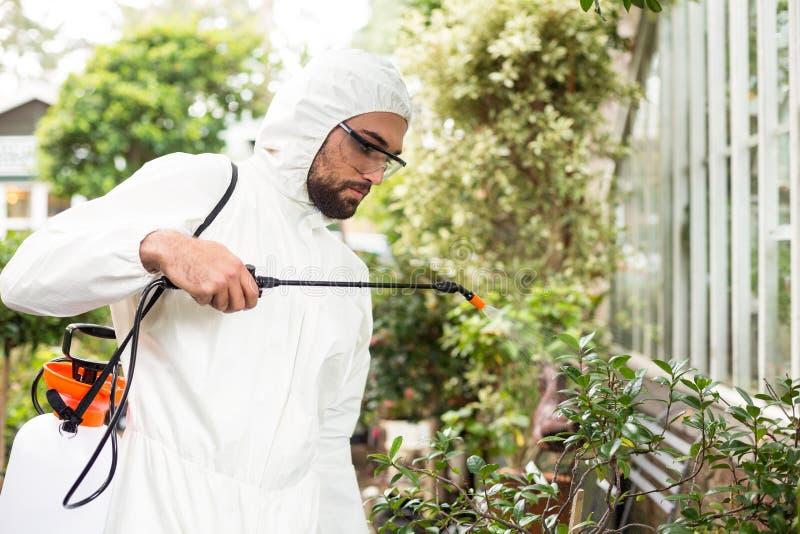Manlig forskare som besprutar bekämpningsmedel på växter fotografering för bildbyråer