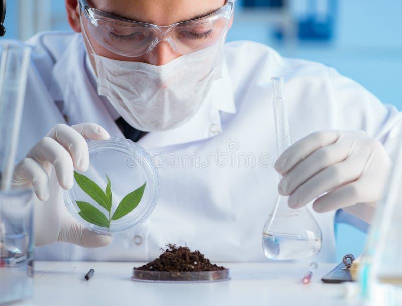 Manlig forskare som experimenterar i ett laboratorium royaltyfria foton