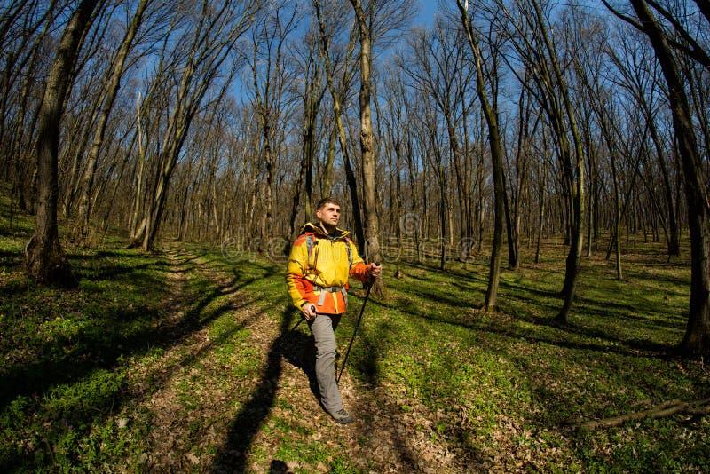 Manlig fotvandrare som ser till sidan som går i skog royaltyfri foto