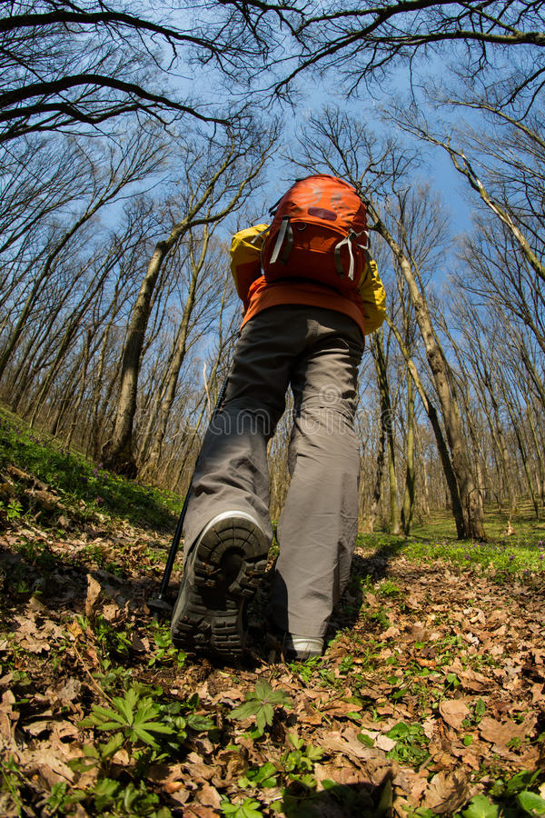 Manlig fotvandrare som ser till sidan som går i skog royaltyfri bild
