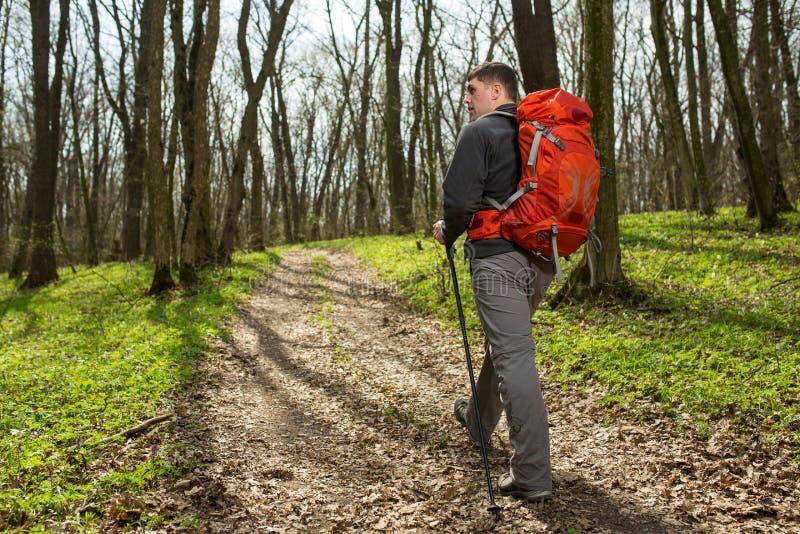 Manlig fotvandrare som ser till sidan som går i skog arkivfoton