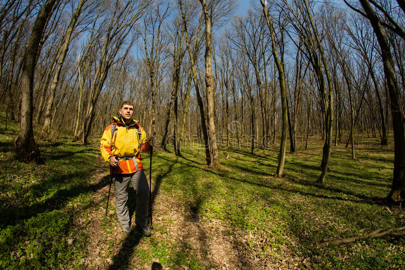 Manlig fotvandrare som ser till sidan som går i skog arkivbilder