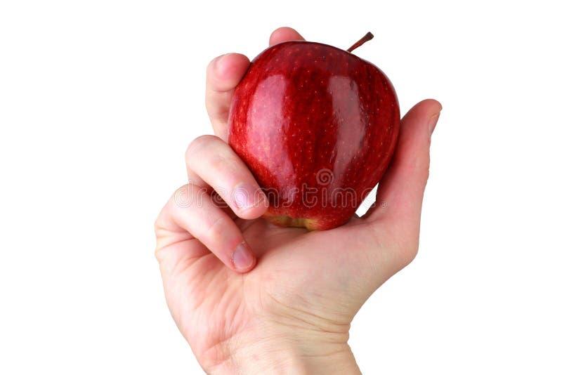 Manlig hand som rymmer det röda mogna äpplet isolerat på vit bakgrund arkivbild