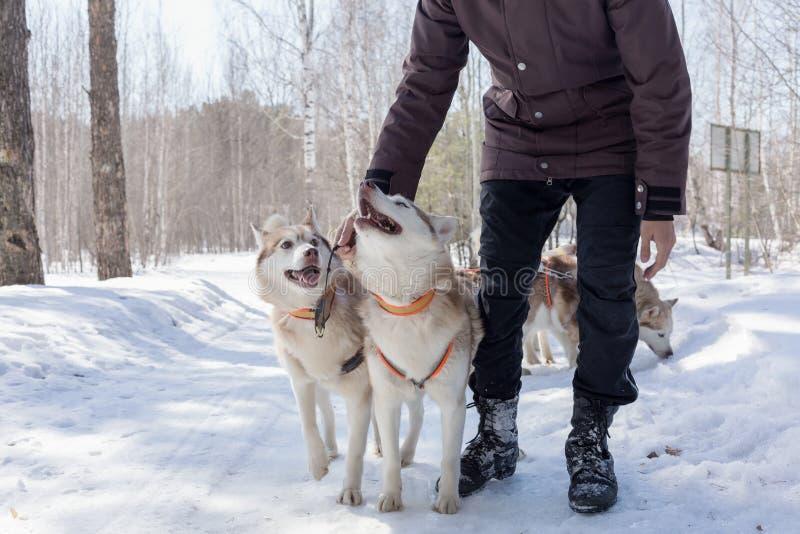 Manlig hand som slår den skrovliga hunden fotografering för bildbyråer