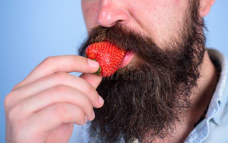Manlig jordgubbe för framsidaskäggförsök Omgiven skäggmustasch för bär manlig mun Gastronomiskt nöje Lustbegrepp muntligt royaltyfri bild
