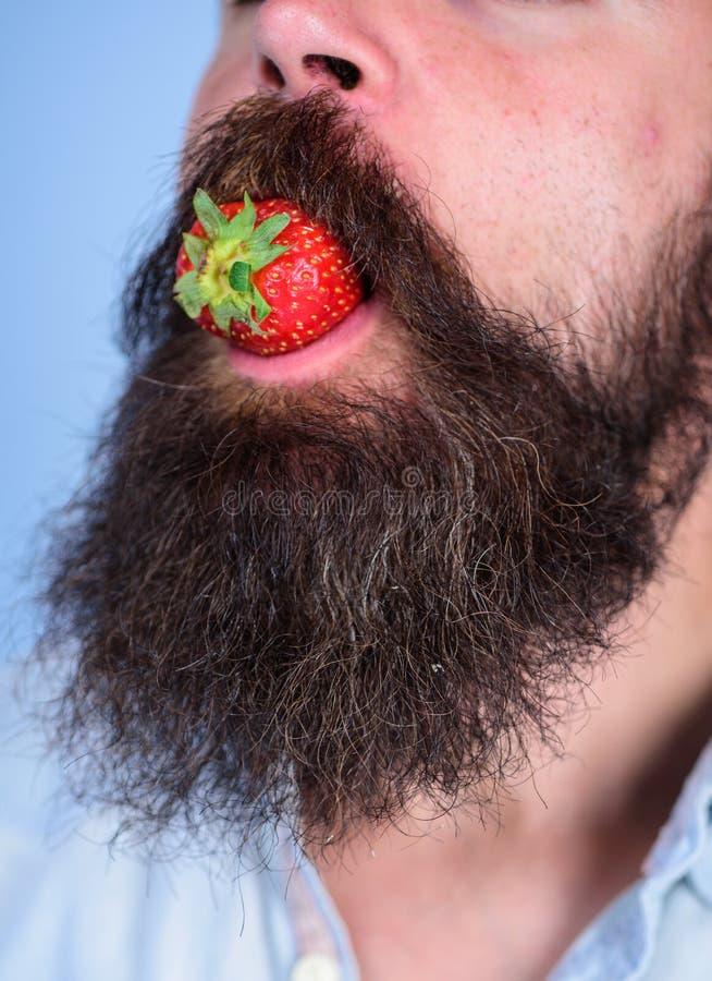 Manlig jordgubbe för framsidaskäggförsök Omgiven skäggmustasch för bär manlig mun Gastronomiskt nöje Mannen äter sött royaltyfri foto