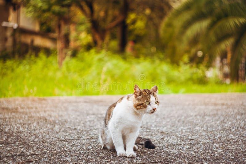 Manlig katt som utomhus sitter med grönt gräs som en bakgrund fotografering för bildbyråer