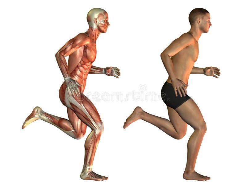 Manlig kropp, när gå royaltyfri illustrationer