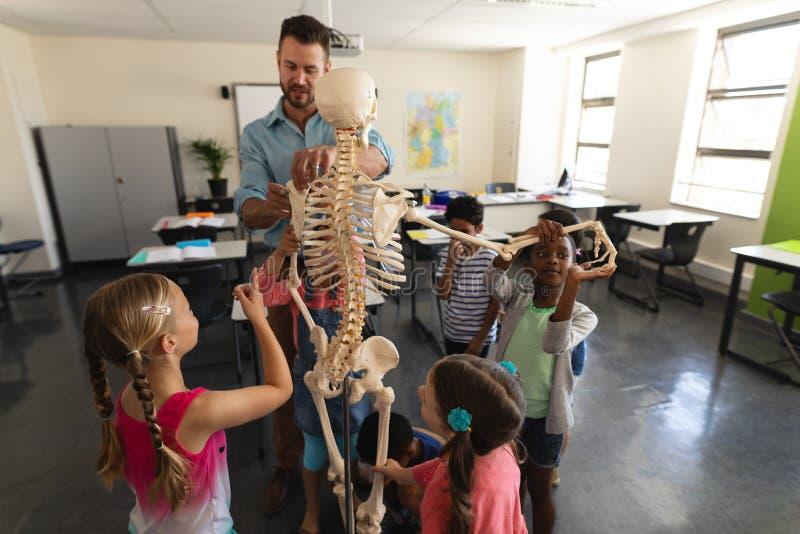 Manlig lärare som förklarar den skelett- modellen i klassrum royaltyfria bilder