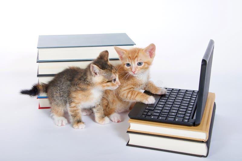 manlig orange strimmig kattkattunge som ser miniatyrbärbar datortypcomput royaltyfri bild
