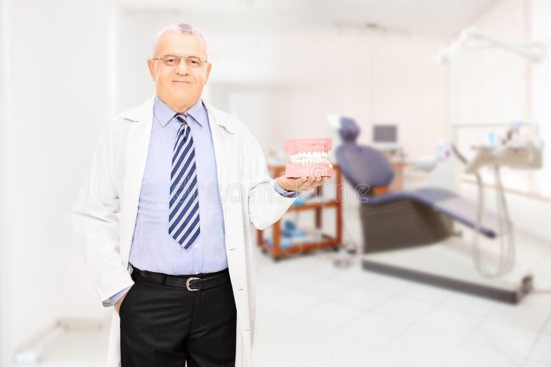 Manlig tandläkare som rymmer en tandprövkopia gjord ut ur gipsförband på arkivbild