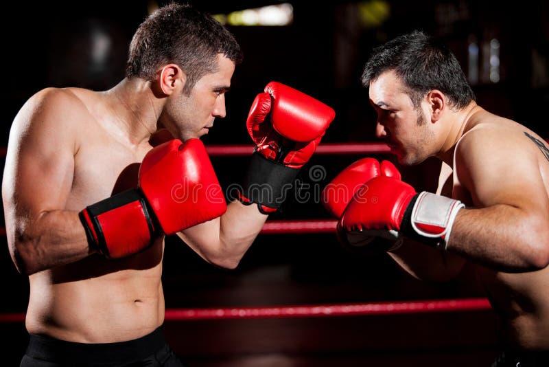 Manliga boxare under ett slagsmål arkivfoton