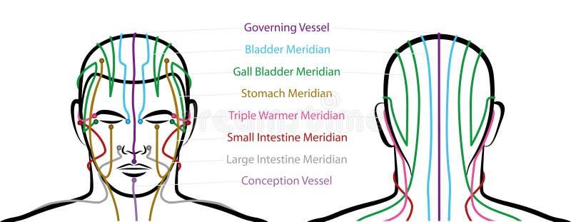 Manliga Head akupunkturpunkter för meridianer royaltyfri illustrationer