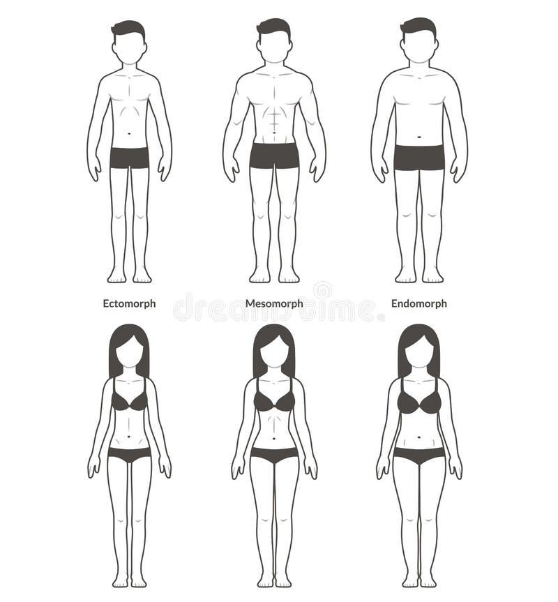 Manliga och kvinnliga kroppstyper stock illustrationer