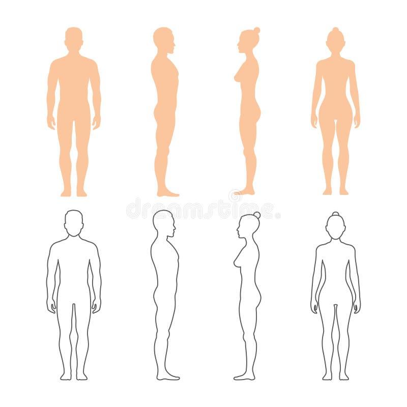 Manliga och kvinnliga mänskliga vektorkonturer stock illustrationer