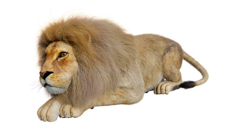 manligt lejon f?r tolkning 3D p? vit arkivfoton