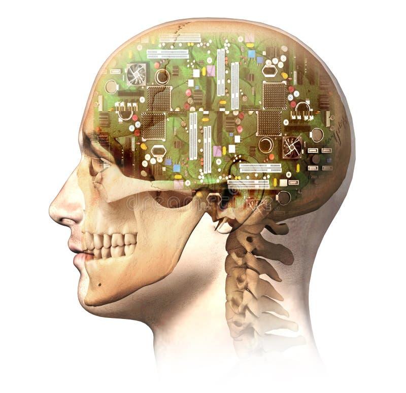 Manligt mänskligt huvud med skallen och den konstgjorda behån för elektronisk strömkrets stock illustrationer
