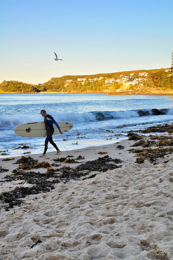 Download Manly surfer editorial stock image. Image of sydney, surfer - 32846304
