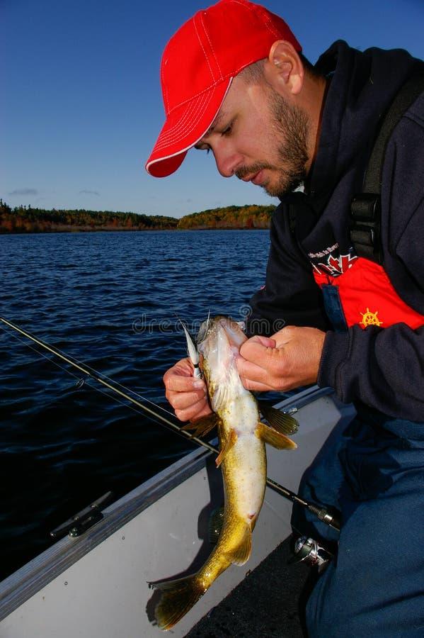 Mann-Angler hakt einen Hornhautfleck los, der auf einem Spannvorrichtungs-Köder-Fischen gefangen wird stockfoto