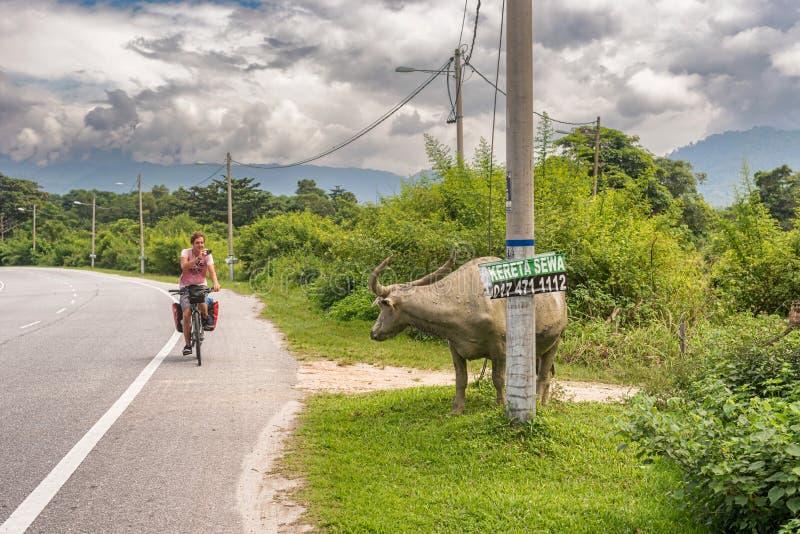 Mann auf dem Fahrrad, das auf die Straße in Malaysia reist stockbild