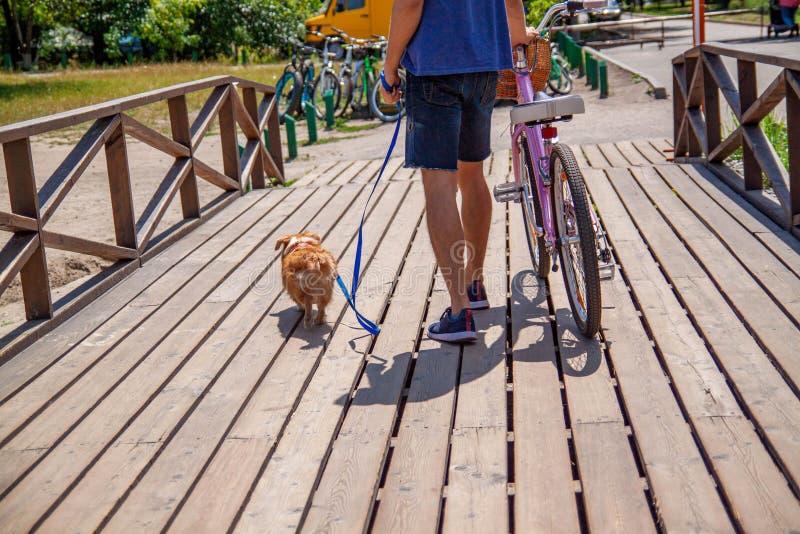 Mann auf Fahrrad im Park in der Firma seines Hundes stockfotografie