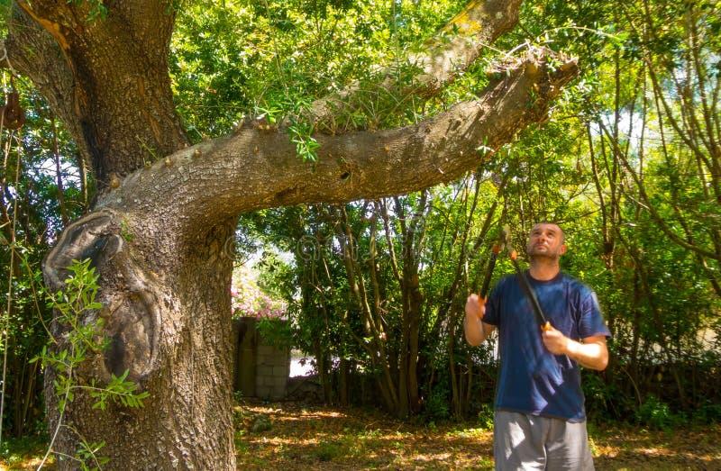 Mann benutzt die Scheren in einem Garten stockfotografie