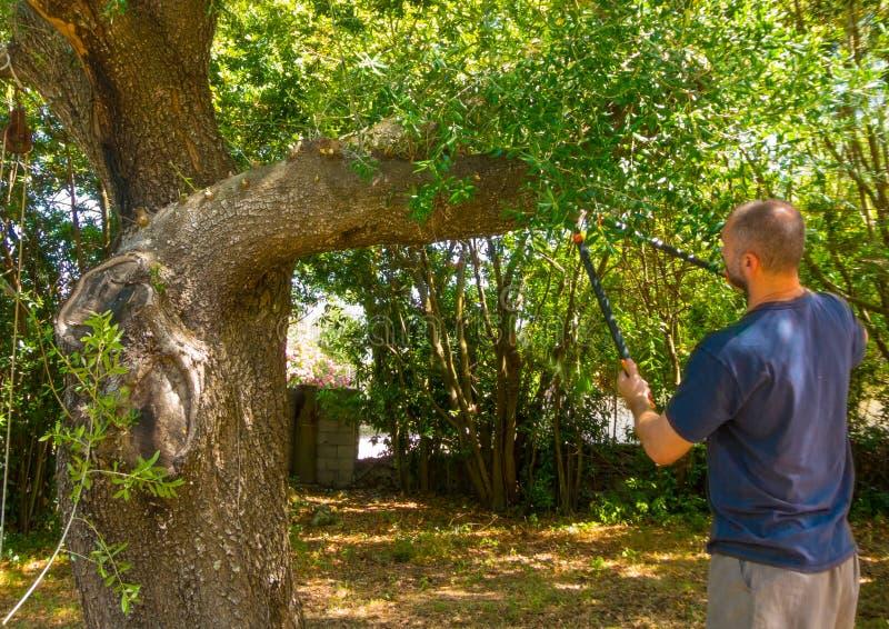 Mann benutzt die Scheren in einem Garten lizenzfreies stockfoto