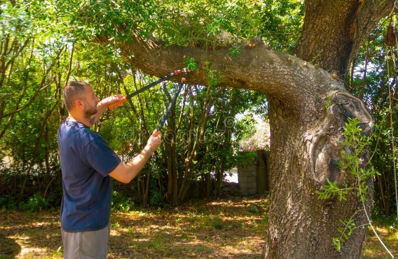 Mann benutzt die Scheren in einem Garten stockbilder