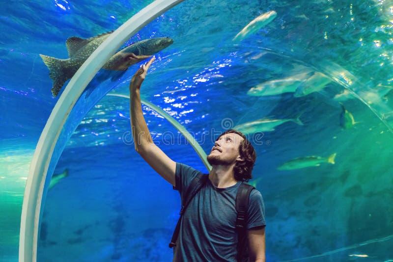 Mann betrachtet die Fische im Aquarium lizenzfreie stockfotografie