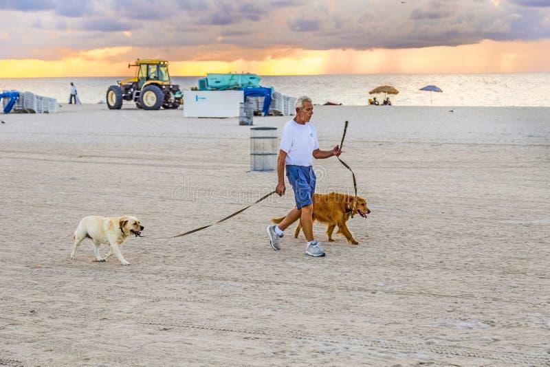 Mann in den späten Nachmittagsspaziergängen entlang Südstrand mit seinen Hunden lizenzfreies stockbild
