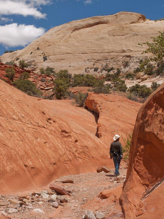 Mann, der in der schmalen Schlucht des roten Sandsteins wandert stockbilder