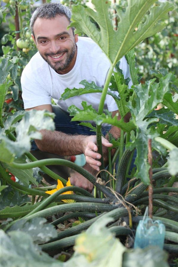 Mann, der durch Gemüsegarten knit stockbilder