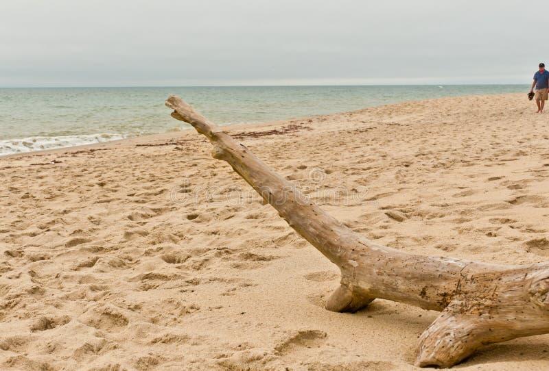 Mann, der eine stürmische Küste auf Ostufer Nantucket geht stockfoto