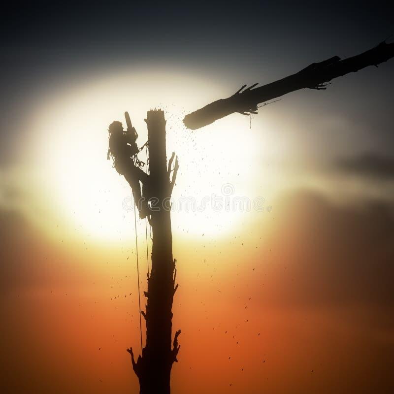 Mann, der einen Baum verringert lizenzfreie stockbilder