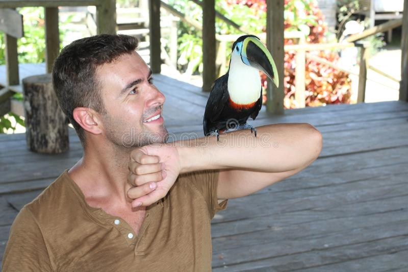 Mann, der einen bunten Tukanvogel hält stockfotografie