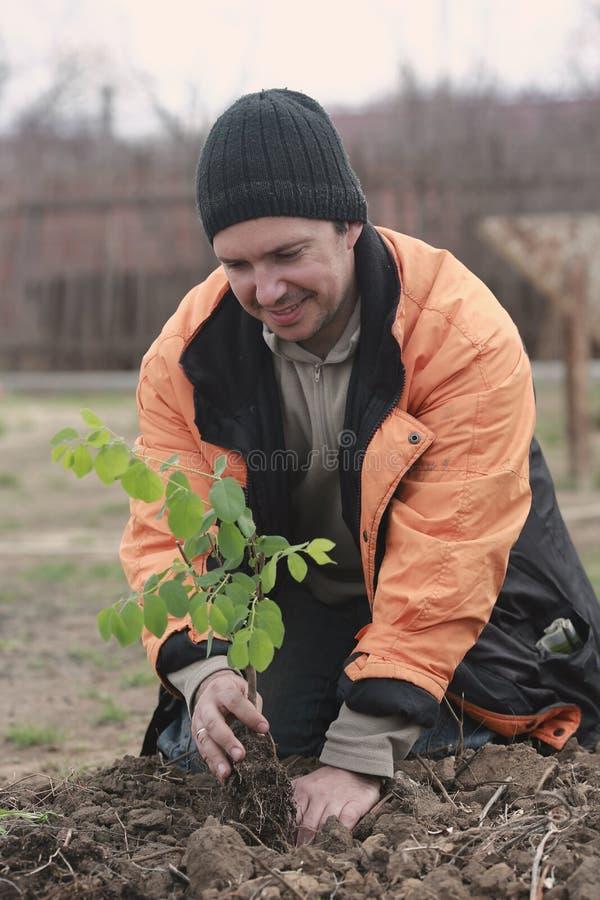 Mann, der einen Schössling pflanzt stockfotografie