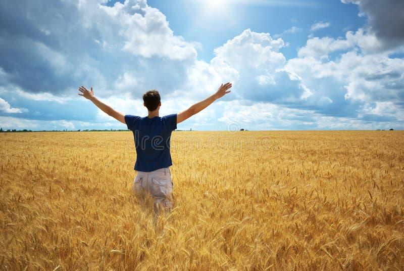 Mann in der gelben Weizenwiese stockbild