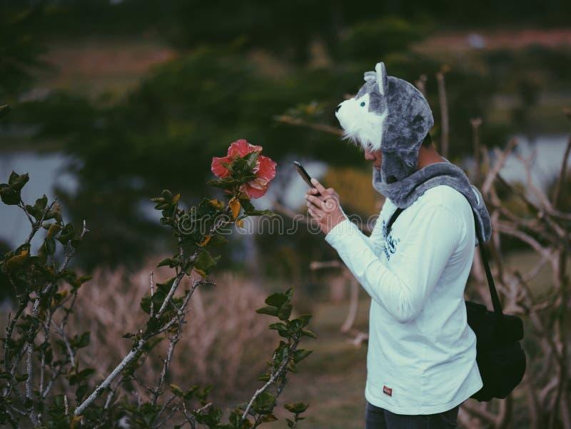 Mann, der Grey Wolf Critter Cap Taking ein Foto der rosa Hibiscus-Blume trägt stockbilder