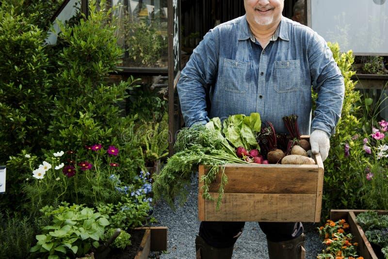 Mann, der Kiste neue Agrarprodukte hält lizenzfreie stockbilder