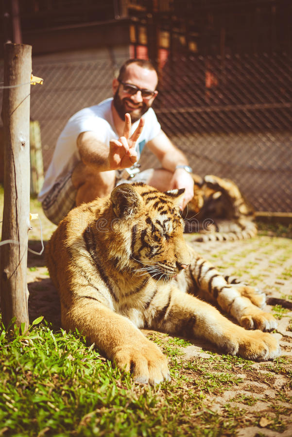 Mann, der Ohren zum Tiger hält stockbilder