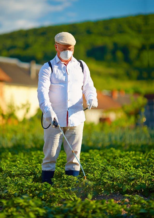 Mann in der Schutzkleidung, die Insektenvertilgungsmittel auf Kartoffeln sprüht lizenzfreie stockfotos
