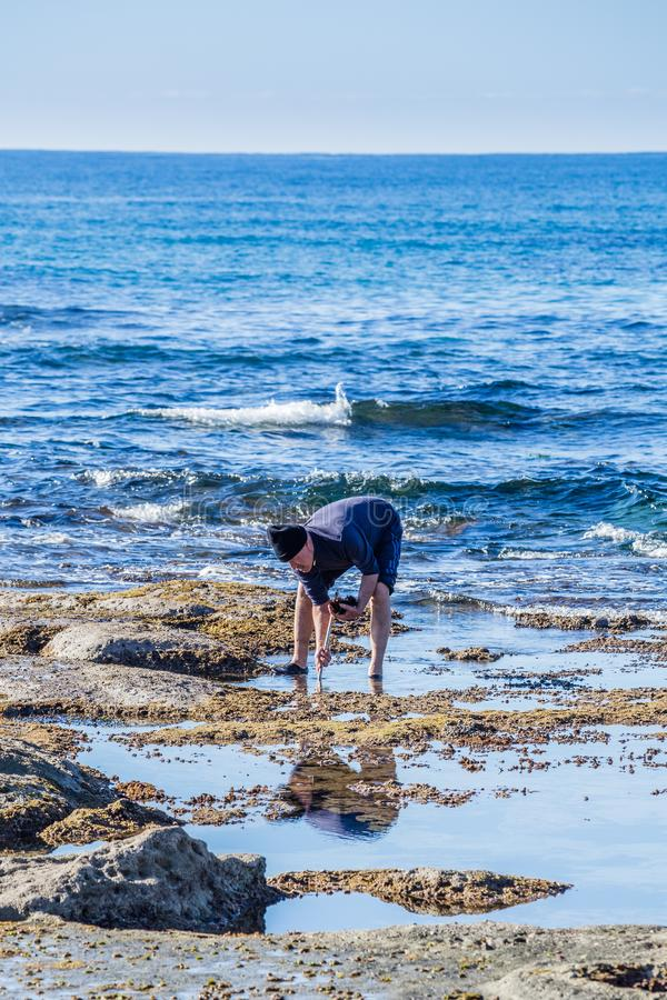 Mann, der Seeigel sammelt lizenzfreies stockfoto