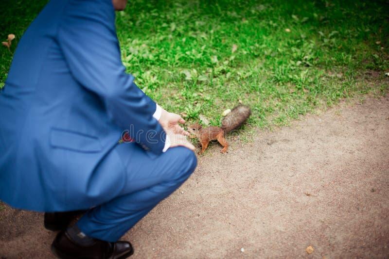 Mann in einem Anzug zieht ein Eichhörnchen ein stockfotografie