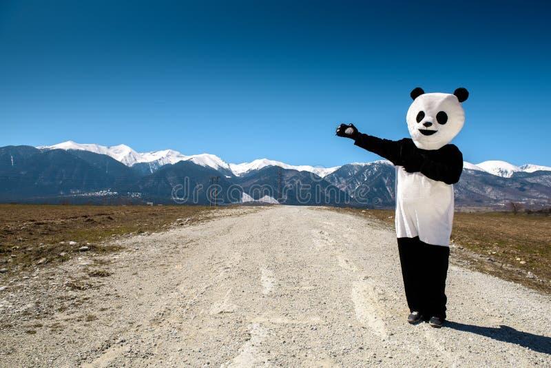 Mann in einem Pandakostüm zeigt Straße zu den Bergen Bulgarien, Bansko - 2015 lizenzfreie stockfotos